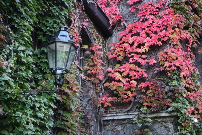 turning leaves, Mons, Belgium