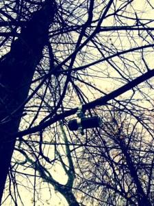 photo41